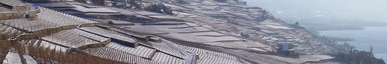 vignes_hiver1.jpg