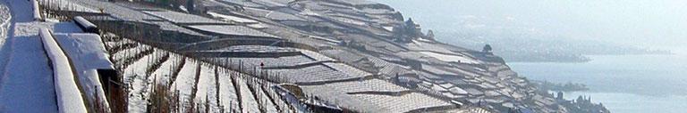 vignoble-hiver-33.jpg