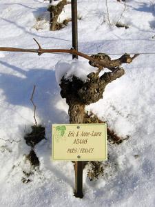 sous-la-neige-3.jpg